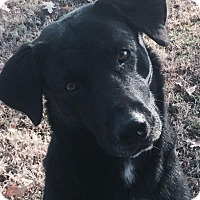 Adopt A Pet :: Ollie - Lewisville, IN