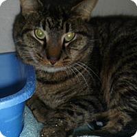 Adopt A Pet :: Milo - Hamburg, NY