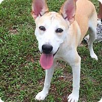 Adopt A Pet :: Maddie - Clearwater, FL
