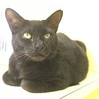 Adopt A Pet :: Emerald - Stevensville, MD