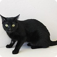 Adopt A Pet :: Mischonne - Fountain Hills, AZ