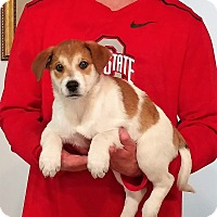 Adopt A Pet :: Remington - South Euclid, OH