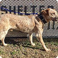 Adopt A Pet :: Meryl - Okmulgee, OK