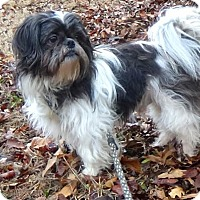 Adopt A Pet :: Oreo - Holly Springs, MS