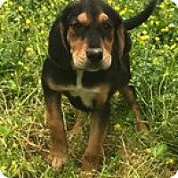 Adopt A Pet :: Bessie - Starkville, MS