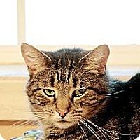 Adopt A Pet :: Pedro - Whitewater, WI