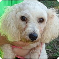 Adopt A Pet :: Maddox - Plainfield, CT