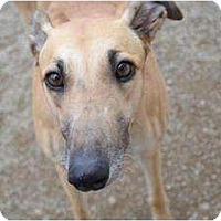Adopt A Pet :: Susan (Southern Girl) - Chagrin Falls, OH
