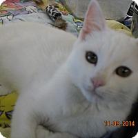 Adopt A Pet :: Aurora - Riverside, RI