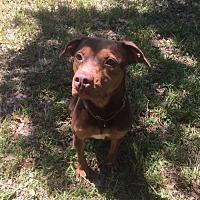 Adopt A Pet :: Kia - Tampa, FL