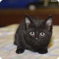 Adopt A Pet :: Elizabeth - Medina, OH