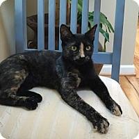 Adopt A Pet :: Lyra - Greensboro, NC