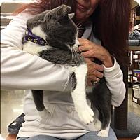 Adopt A Pet :: Mr. Bob - Pasadena, CA