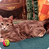 Adopt A Pet :: Ricky Ricardo - Palo Cedro, CA