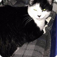 Adopt A Pet :: Inty - Freeport, NY