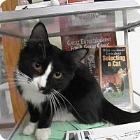 Adopt A Pet :: Embry - Milwaukee, WI