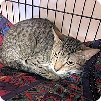 Adopt A Pet :: Winny - Lunenburg, MA