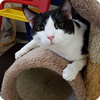 Adopt A Pet :: Oreo - Lexington, KY