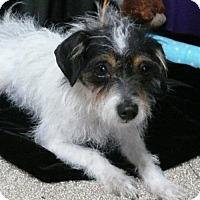 Adopt A Pet :: Chloe - REDDING, CA