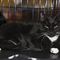 Adopt A Pet :: A..  Tate - Charlotte, NC