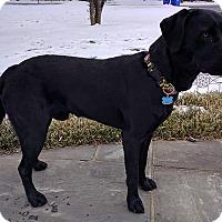 Adopt A Pet :: Rudy - Buckeystown, MD