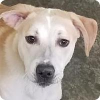 Adopt A Pet :: Kato - Paducah, KY