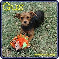 Adopt A Pet :: Gus - Plano, TX