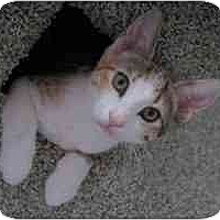 Adopt A Pet :: Beverly - Portland, OR
