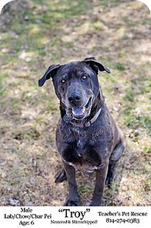 Labrador Retriever/Shar Pei Mix Dog for adoption in Coudersport, Pennsylvania - TROY