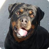 Adopt A Pet :: Sadie - Cuddebackville, NY