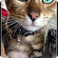 Adopt A Pet :: Leo - Davis, CA