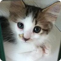 Adopt A Pet :: Marty - Hamilton, ON