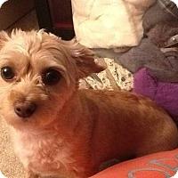 Adopt A Pet :: Sasha - Lomita, CA