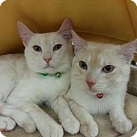 Adopt A Pet :: Mr. Green - Fenton, MO