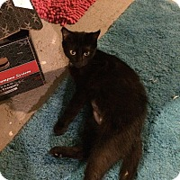 Adopt A Pet :: marie - Muskegon, MI