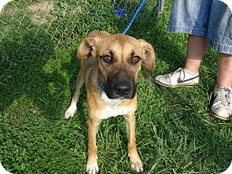Hound (Unknown Type) Mix Dog for adoption in Delaware, Ohio - Sadie
