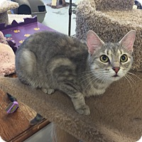 Adopt A Pet :: Maeve - San Leon, TX