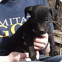 Adopt A Pet :: Noah - Lincoln, NE