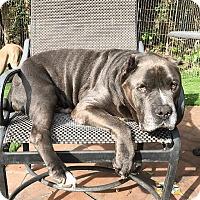 Adopt A Pet :: Jerome - santa monica, CA