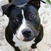 Adopt A Pet :: Aqua - San Diego, CA