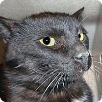 Adopt A Pet :: 342607 - Wildomar, CA