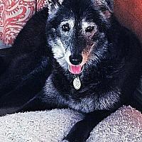 Adopt A Pet :: Indigo - McKinney, TX