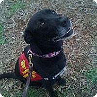 Adopt A Pet :: Gabbie - Bergheim, TX