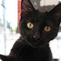 Adopt A Pet :: Naomi - Santa Monica, CA