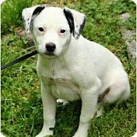 Adopt A Pet :: Collin - Staunton, VA