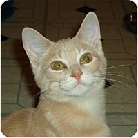 Adopt A Pet :: Jonah - Elmira, ON