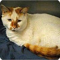 Adopt A Pet :: Rudy - Kensington, MD