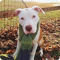 Adopt A Pet :: Diego - Reisterstown, MD