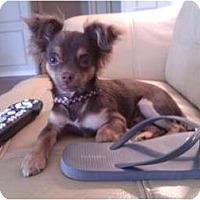 Adopt A Pet :: Mr. Big - Plano, TX