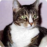 Adopt A Pet :: Arlee - Medway, MA